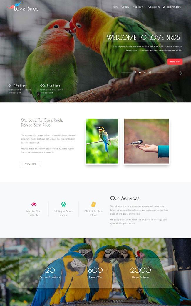 斗鸟养鸟遛鸟交流网站模板