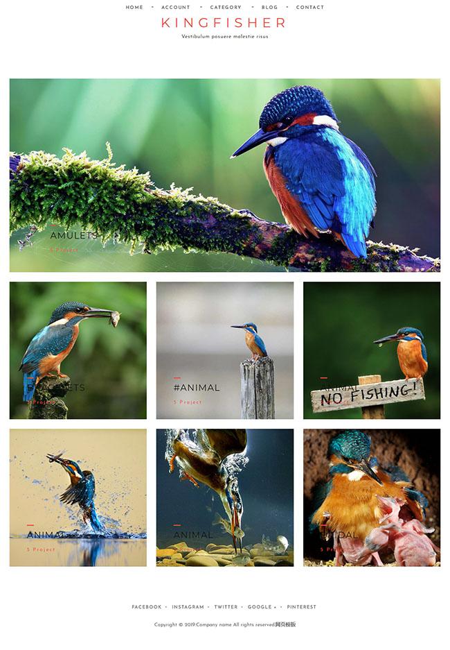 鸟类摄影作品展示网站模板