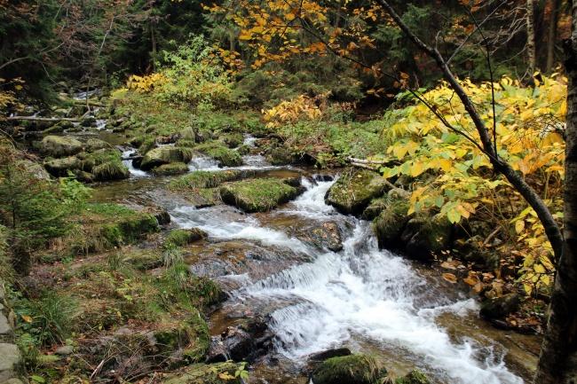 深山中流淌小溪图片
