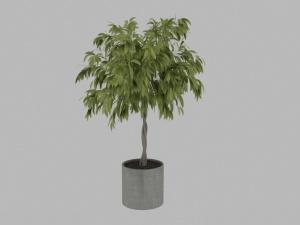 綠色植物盆栽3D模型