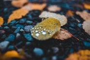 非主流落葉帶水珠圖片