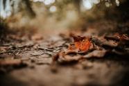 非主流枯黃落葉圖片
