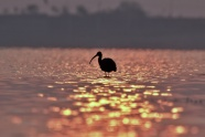海水中長喙小鳥剪影圖片