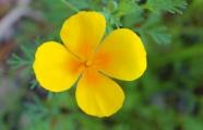 漂亮黃色花朵攝影圖片