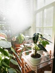 陽光照射下的盆栽圖片
