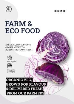 紫甘藍蔬菜海報設計