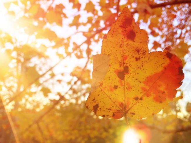 非主流落葉唯美意境圖片